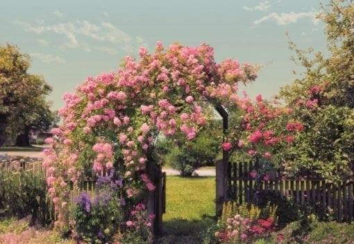 8-936 Rose Garden