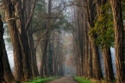 MU1524 - Acacia Road