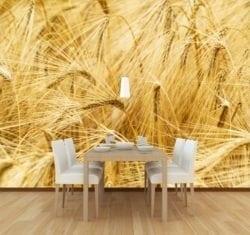 MU1461 - Wheat Field