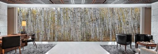 MU1457.01 - Canadian Birch Forest