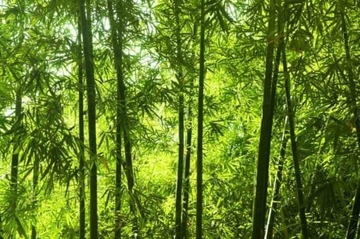 MU1434 - Asian Bamboo Forest