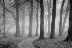 MU1353 - The Winding Path - Black and White