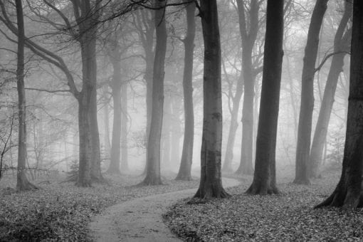 MU1353 - The Winding Path - Black and White