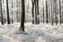 MU1264 - White Forest
