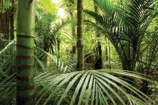 MU1203 - Rain Forest