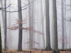 MU1202 - Morning Fog
