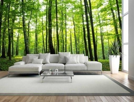 MU1186 - Sunny Forest