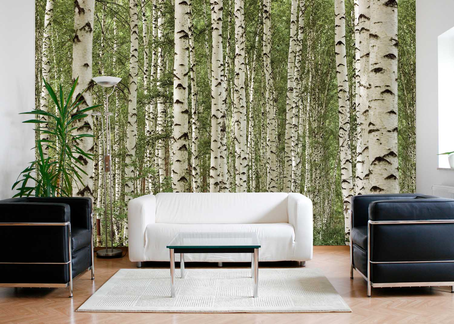 MU1120 - Birch Tree Forest