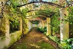 MU1119 - Garden in Western Cape, South Africa