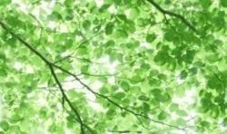 MU1540 - Foliage Under the Sun