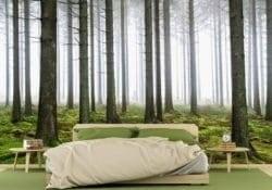 MU1574 - Pine Forest