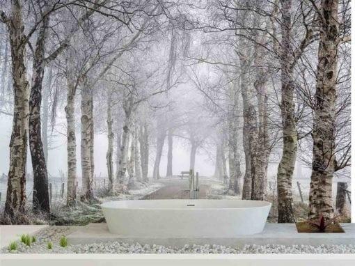 MU1578 - Frozen Birches