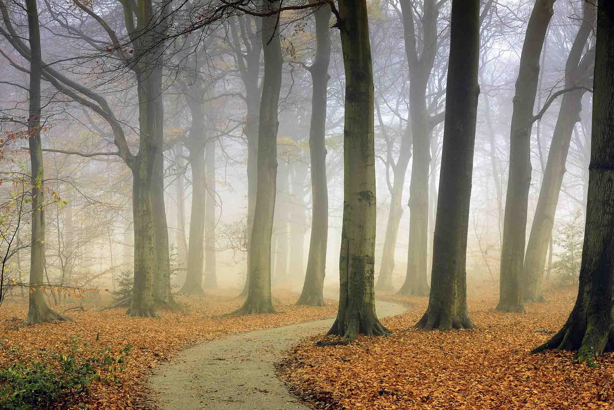MU1443 - The Winding Path