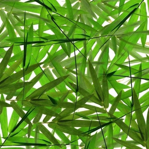 1639_Bamboo Leaves