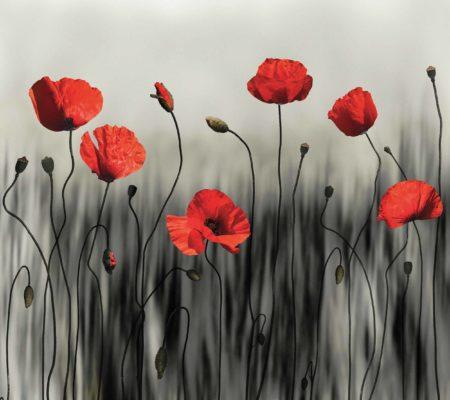 Poppy-modern-art-image