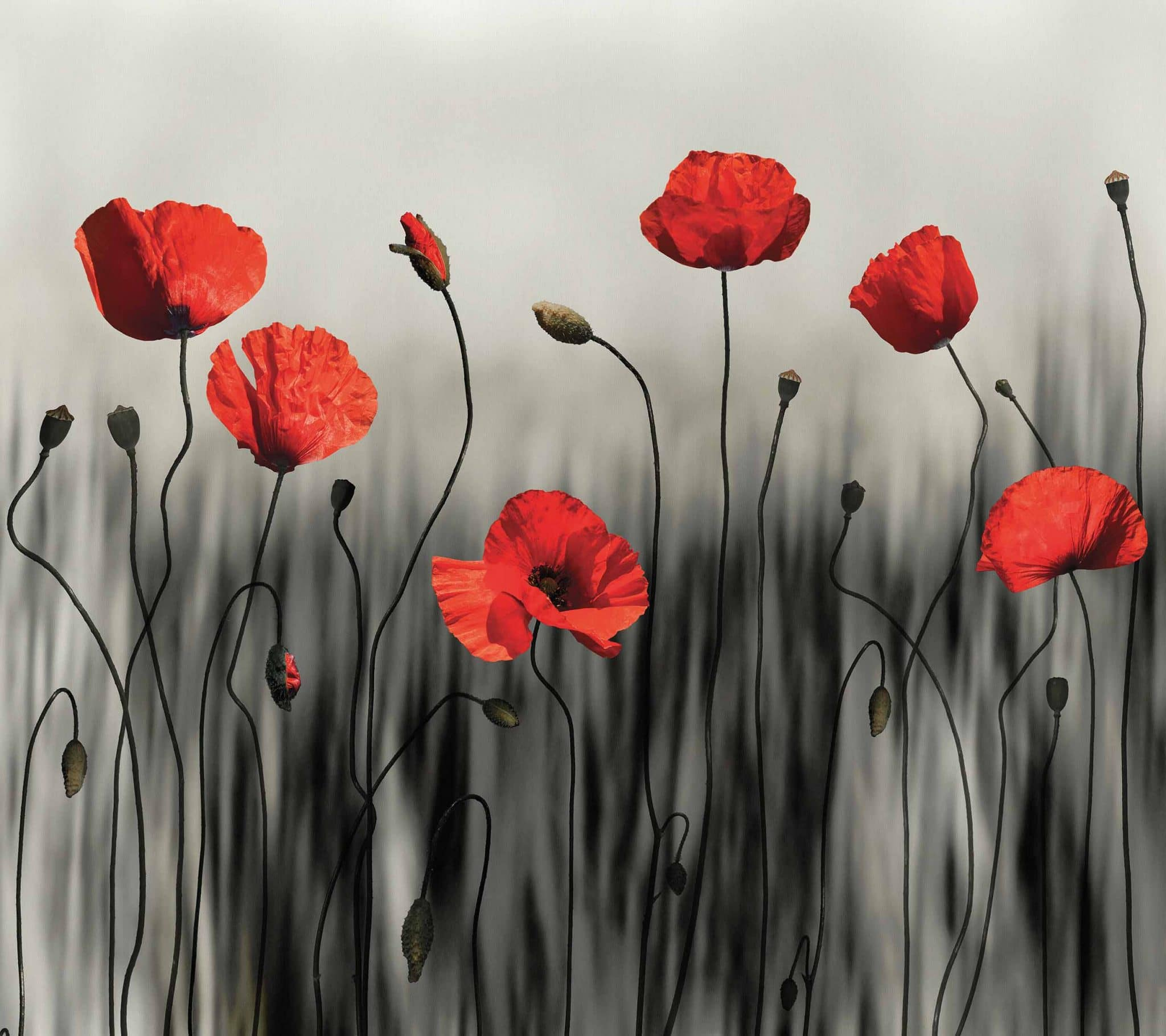 MU1721 Poppy Art 磊 Photo Wallpaper